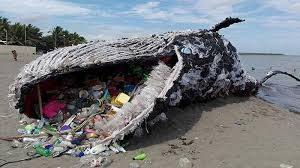 Paus Mati Karena Sampah Plastik